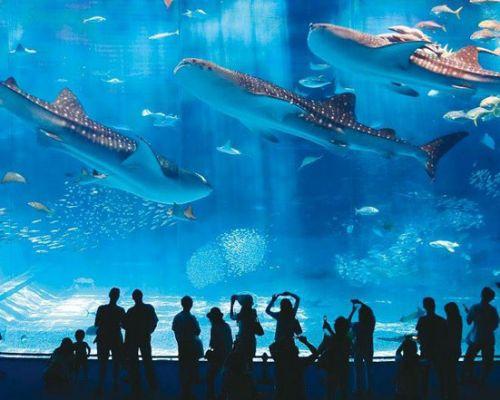 Chocolate Factory and Aqua Florya Aquarium